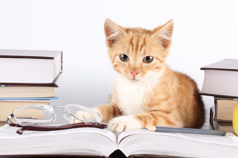 cat studying